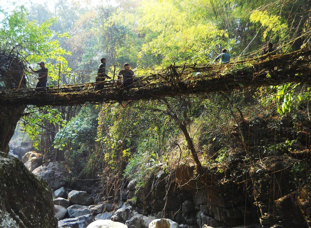 Ponts vivants du meghalaya